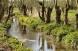 2b1 Kusebach Biotop Apr 15