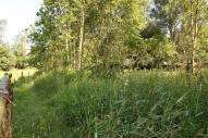 2b2 Kusebach Biotop Juli 15