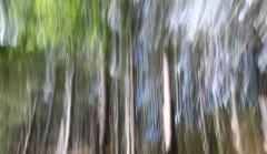 Bewegungsunschärfe im Wald