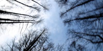 Eichenkreis mit gezogener Kamera