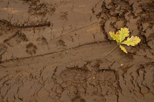 Spuren im Lehm