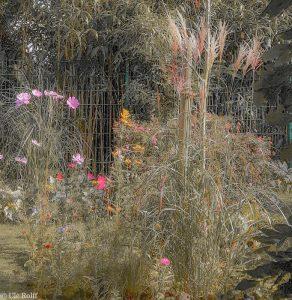 Sommerblumen zum Herbstanfang