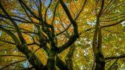 Herbstbaum von unten