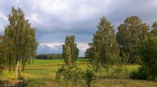 Frühherbstliches Münsterland mit Birken
