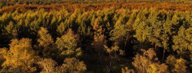 Abendwald