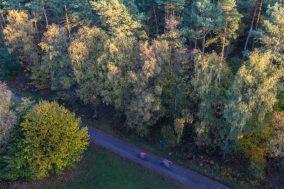 Radfahrer im Wald