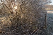 frostiger-morgen-3-von-13