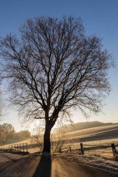 frostiger-morgen-9-von-13