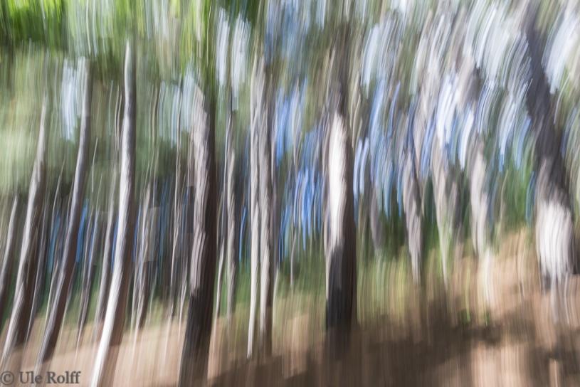 Wald bei Bergen-aan-Zee