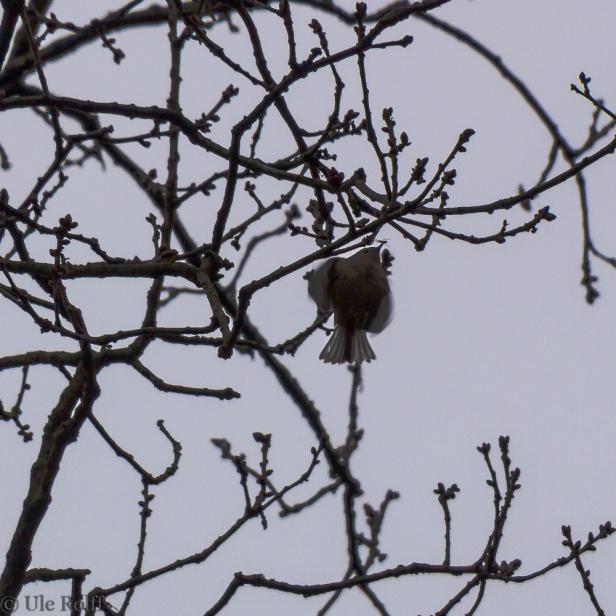 Vogel mit Insekt