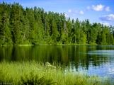 Schwedischer Waldsee