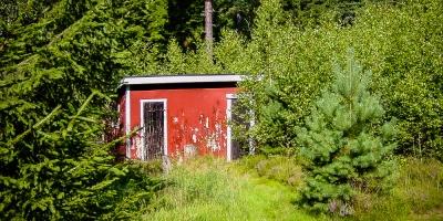Holzschuppen in schwedischem Gebüsch