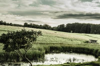 Teich in Hagen