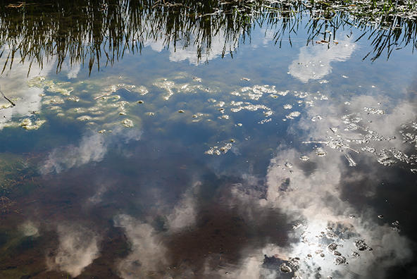 Teich in Hagen (Rügen)