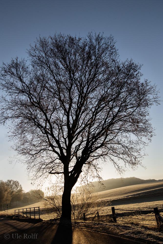 Baum an der Straße Hohe Mark
