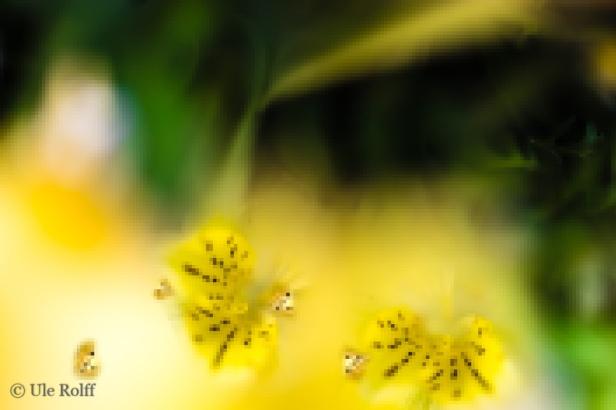 Illustration zum Gelben Würfeln