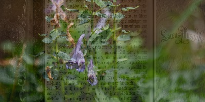 Lerchensporn über Lexikontext montiert