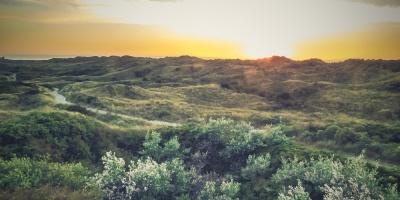 Juister Dünenlandschaft