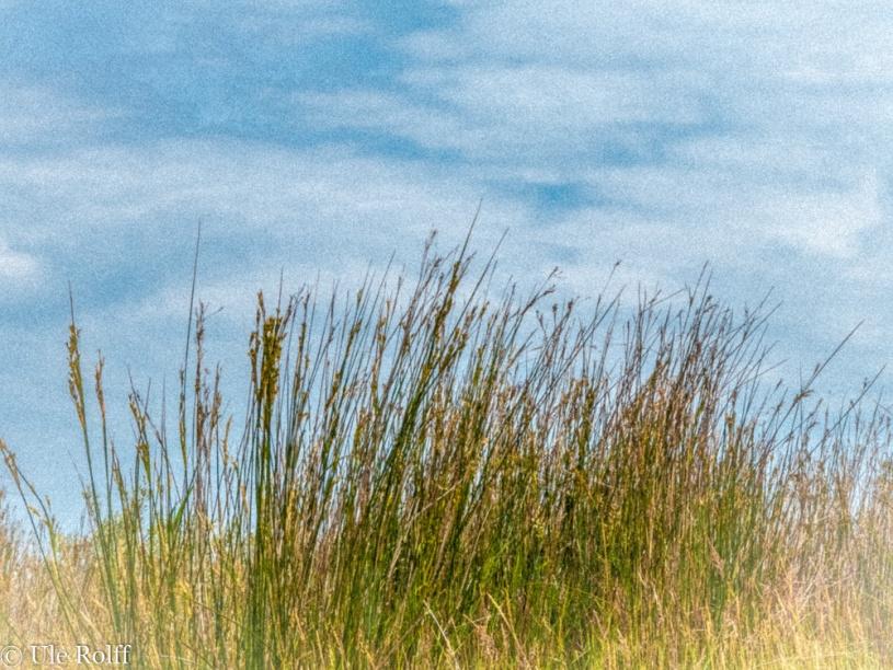 Im Gras am Vogelschutzgebiet