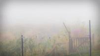 Garten im Nebel