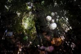 Pilze und Wald