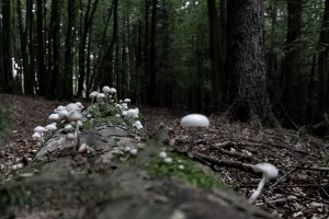 Pilze an Totholz