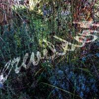 LRM_20191013_151006 overgrown 96 ppi 1200